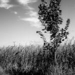Samotność - Drzewko (1 of 1)