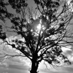 Tree and sun (1 of 1)